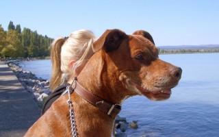 Kutyával együtt ritkán csobbanhatunk a habokban