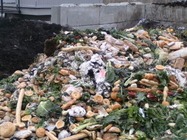 Az ENSZ becslése szerint a világon megtermelt élelmiszer fele-harmada kárba vész. Fotó: www.informa-tico.com/fregan