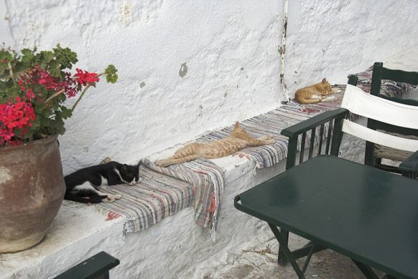 Cica_siesta