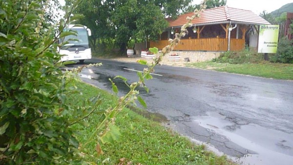 A beláthatatlan kanyar miatt az úttest közelében létesített borozóhoz a szemközti oldalon kialakított parkolóból átkelni szándékozó vendégek veszélybe kerülhetnek