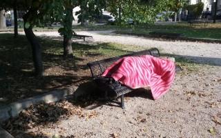 VÁROSUNK – Alvók a parkban