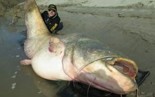 HARCSA – Olasz horgász trófeája