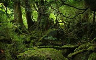 Az erdők internetje