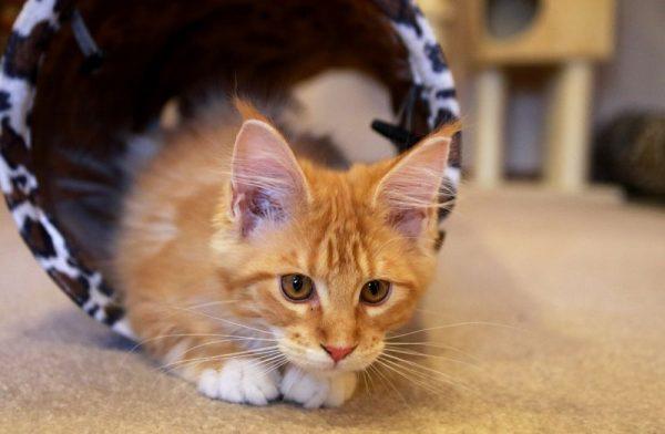 Obelix, a legifjabb, a héten költözött be a többiekhez. Fotók: Nagy Lajos