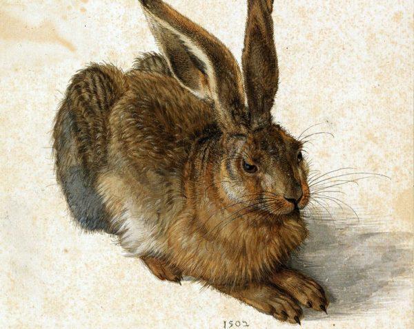 Albrecht Dürer híres nyula