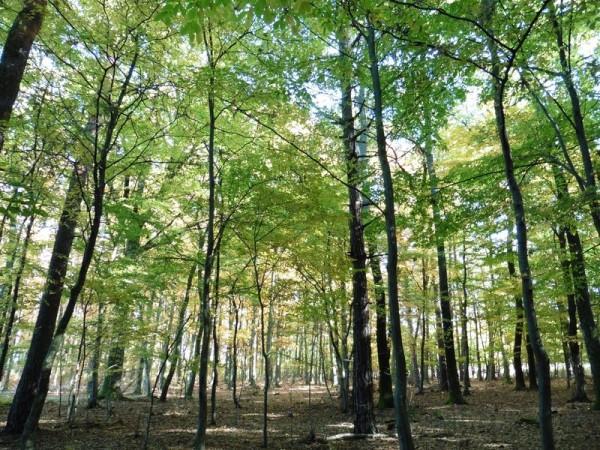 Vigyázzunk erdeinkre, és ültessünk minél több fát! Fotó: a szerző