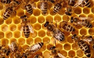 VILÁGNAP – Mentsük meg a méheket!