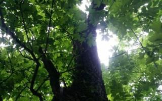 """SÉTA – Immunerősítő erdei """"fürdő"""""""