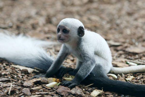 Újabb kis jövevény az állatkertben. Fotó: Veszprémi Állatkert