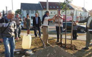 EURÓPA-FA – Elkötelezettségünk szimbóluma