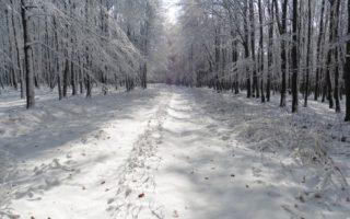 BAKONY – Leesett az első hó