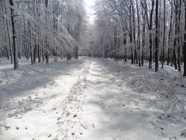 A havas Bakony felüdülés a szemnek és a léleknek. Fotók: a szerző