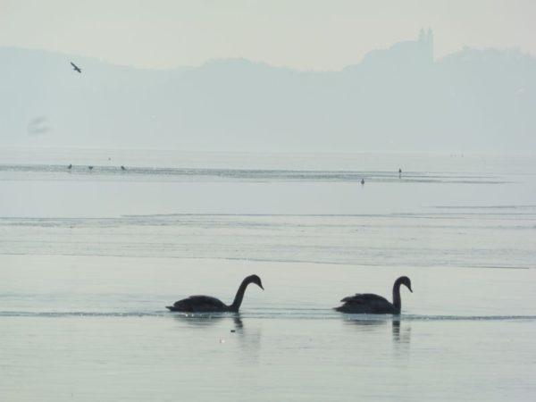 Még nem fagyott be teljesen a Balaton. Fotók: a szerző