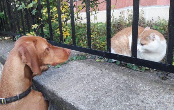 Süti a macskákkal is próbál barátkozni. Fotók: a szerző