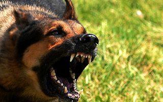 NAPIMORGÓ – Az audis nő és a kutyái