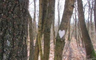 NAPIVIDÁM – Szeretet, szerelem