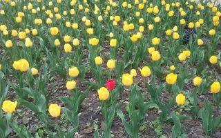 NAPIVIDÁM  – Vörös kakukkfióka