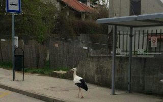 NAPIVIDÁM – A gólya monológja