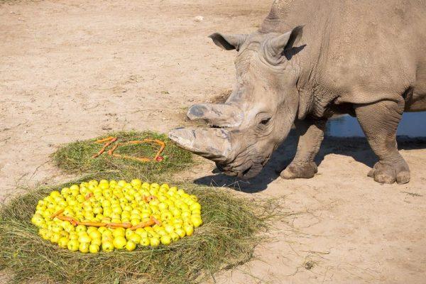 Pablo ajándékot is kapott a jeles évforduló alkalmából. Fotó: állatkert