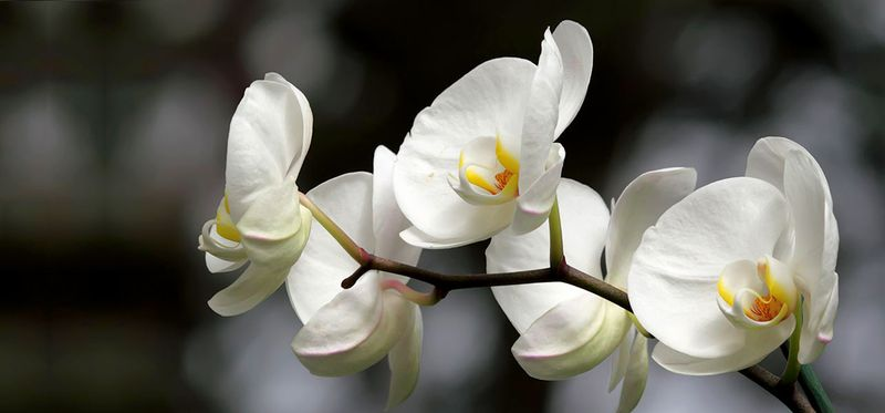 6913_Top-25-Most-Beautiful-White-Flowers