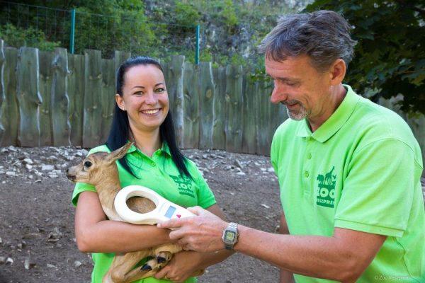 Minden gida egészséges: Fotók: Veszprémi Állatkert