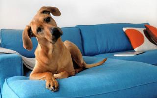 GYŰJTÉS – Kutyákkal, kutyákért