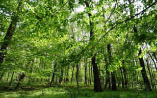 NYUGDÍJAS SZABADEGYETEM – Környezet- és természetvédelem