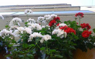 CIVILEK – Aki a virágot szereti…