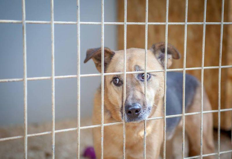 Az egyesület jelenlegi menhelyén 9 kennelben legfeljebb 10–12 kutyát tudnak elhelyezni. Fotók:  a szerző és az egyesület Fb-oldala