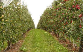KSH – A gyümölcstermesztés interaktív grafikonon