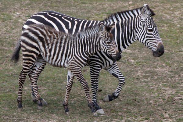 Fotók: Veszprémi Állatkert