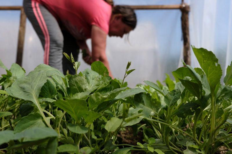 A munkákat a nyertes pályázók szakemberei felügyelik és segítik abban a részvevőket, hogy maguk is megtanulják a kertészkedést. Sokan ennek hatására már otthonukban is elkezdtek gazdálkodni