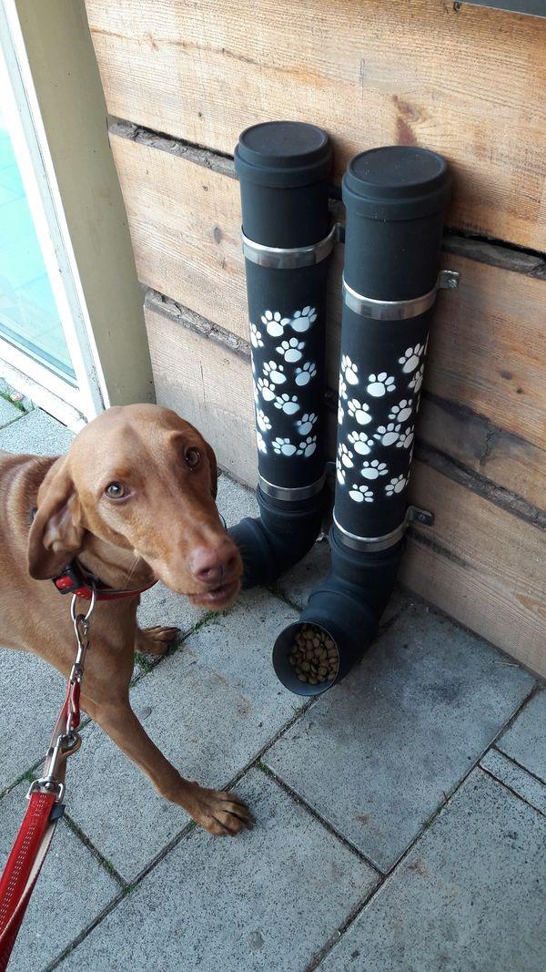 A Szendvics Büfé kutyaitatója. Fotó: a szerző