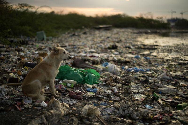 Kutya Manilában. Fotó: Noel Celis/AFP