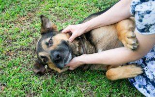 A NÉGYLÁBÚAKÉRT – Önkéntes segítőket vár szombaton az Állatvédő Egyesület
