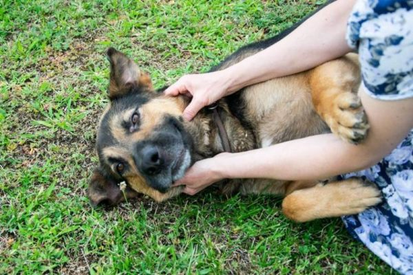 Fotó: Állatvédő Egyesület Fb-oldala