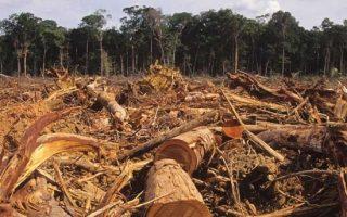 NAGY BAJ – Veszélyben a Föld tüdeje