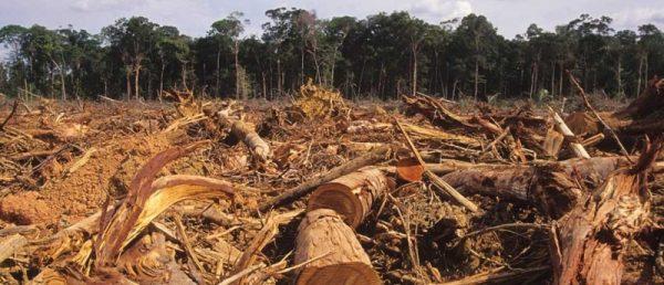 Az erdőirtások felelősek a globális szén-dioxid-kibocsátás ötödéért