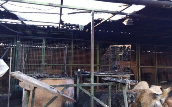Az egész tető leégett. Fotó: Vackoló Állatvédő Egyesület