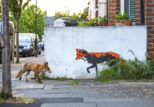 A brit Matthew Maran Londonban készült fotója is a négy kiemelt között kapott helyet. A fotós már több mint egy éve kinézte magának a főváros északi részén található graffitit, tavaly pedig végre sikerült elkapnia egy arra sétáló rókát