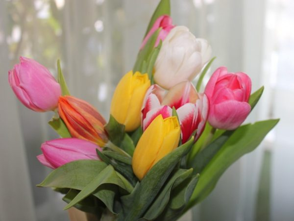 tulipáncsokor