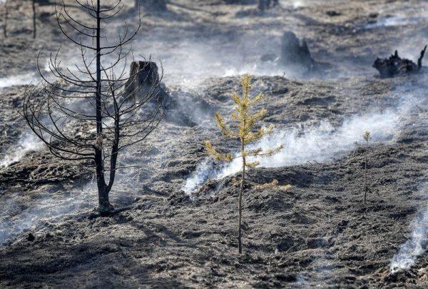 Két hétig lángoltak az erdők tavaly nyáron Svédországban a szokatlanul forró és száraz időjárás következtében. Fotó: Maja Suslin/AFP