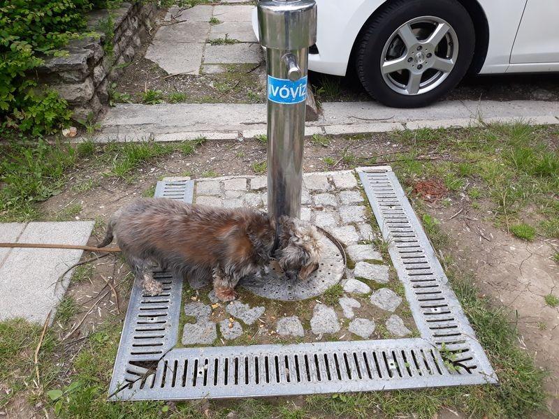 Berci nem tágít, várja a vizet a száraz kútból. Fotók: a szerző