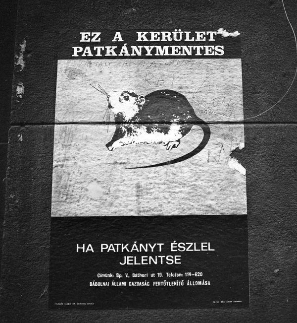 A Bábolnai Állami Gazdaság patkánybejelentést szorgalmazó plakátja 1972-ből. Fotó: Fortepan/Urbán Tamás