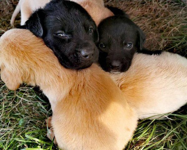 Egy alomnyi kutyagyerek bűbájos tud lenni, felelős gazdaként mégsem árt elgondolkodni azon, lesz-e majd hova elajándékozni, eladni a kölyköket és ha nem, mi lesz velük? Fotók: Állatvédő Egyesület Veszprém