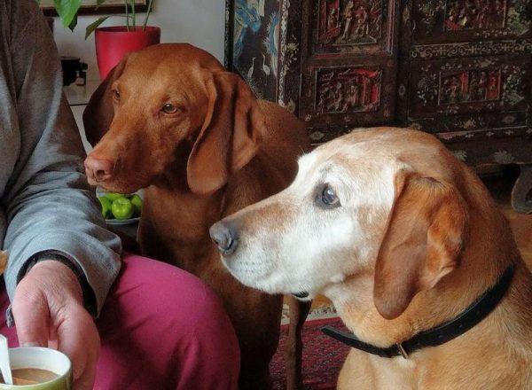 Süti és Lina. Fotó: a szerző