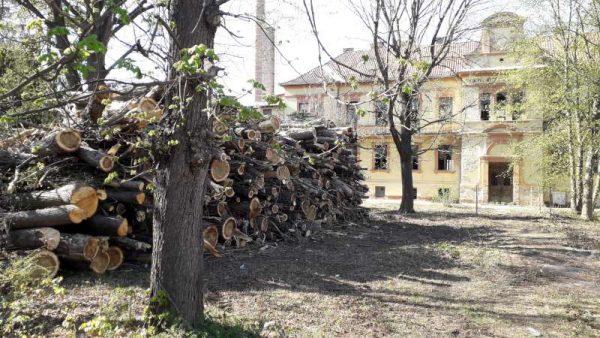 A régi gyerekkórház udvarán halmozták fel a kivágott fákat. Fotók: Veszprém Kukac