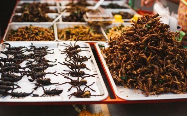 Az emberek nem akarnak tücsköt és bogarat enni. Képünk illusztráció. Fotó: gettyimages.com