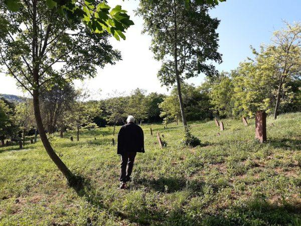 A lovasi régi temetőben a vöröskő sírkövek betűit bogozgatva érdekelne, kik voltak ezek az emberek, hogy éltek nemzedékről nemzedékre? Fotók: a szerző