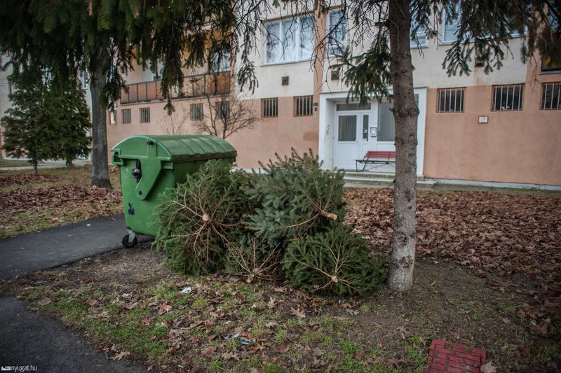 Fotó: Nagy Jácint/nyugat.hu